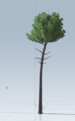 The pine itself. It's slightly sloped  to add a bit more variation
